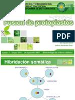 Fusión de Protoplastos