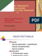 Regio Pectoralis Dan Deltoidea2
