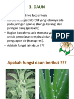 struktur tumbuhan bunga dan daun
