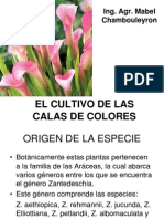 Cultivo_Calas