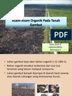 Asam-Asam Organik Pada Tanah Gambut