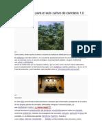 Manual Básico Para El Auto Cultivo de Cannabis 1