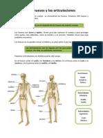 los huesos y las articulaciones