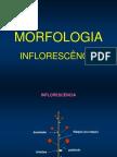 Morfologia inflorescencia