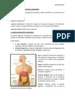 BIOLOGIA UD4