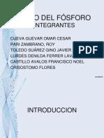 Ciclo Del Fósforo (Diapositiva)