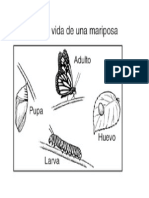 Nombres de Las Fases de Una Mariposa