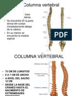 2 columna vertebral.ppt