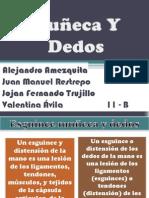 Muñeca Y Dedos.pptx