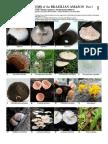 308 Mushrooms-b1.pdf