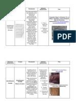 Estructura Sedimentaria.docx