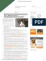 Top 10 Ways to Prevent Animal Cruelty _ ASPCA