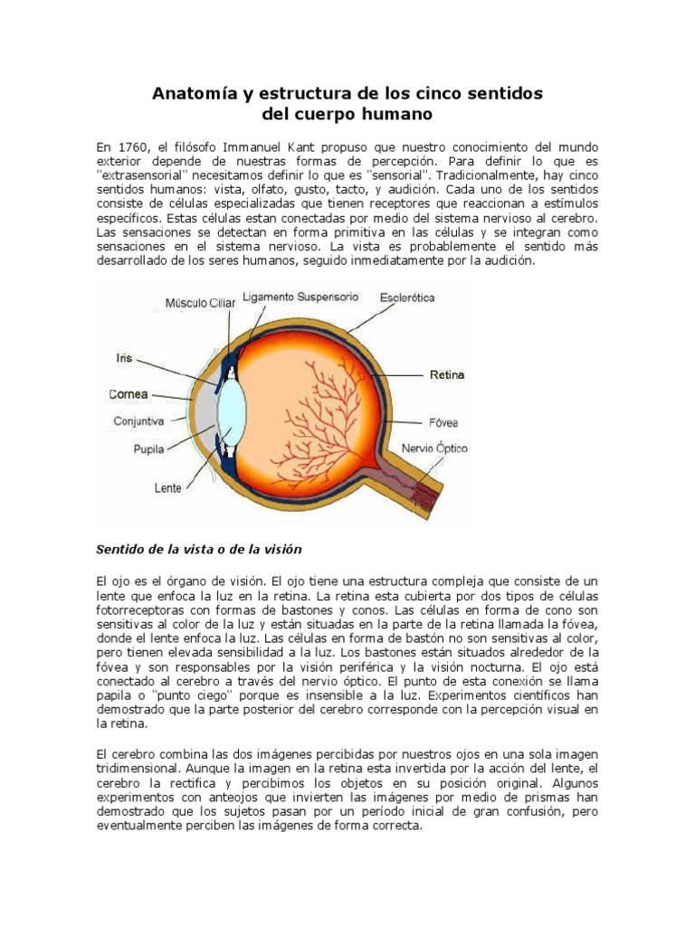 Excepcional Anatomía De La Lente Imágenes - Imágenes de Anatomía ...