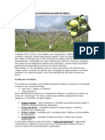 A_Figueira___uma_cultura_com_interesse_na_regiao_do_Algarve.pdf