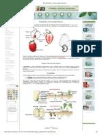 Pseudofrutos e frutos partenocárpicos.pdf