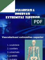 Vascularisasi Innervasi Ext Sup