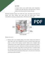 Anatomi dan fisiologi kelenjar ludah.docx