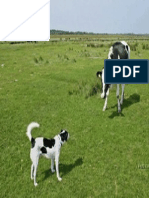 vaca-perro.pdf