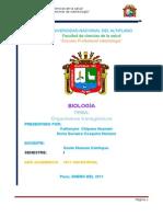 ORGANISMOS TRANSGÉCOS - INFORME.doc