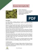 Gleichenia-microphylla-Notesheet