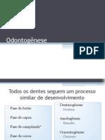 4-Odontogênese.pdf