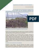 El vetiver para la protección de taludes en los invernaderos.docx