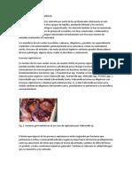cocodrilos inmunologo 2.docx