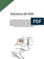 Estructura del ADN.ppt