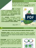 Curs 9 - Respiratia la plante.ppt