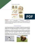 Adaptaciones de los seres vivos al medio.docx