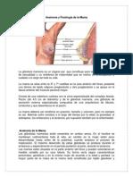Anatomía y Fisiología de la Mama.docx