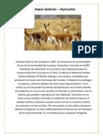 Pampas Galeras.docx