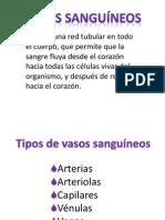 vasos sanguineos seminario fisio.pptx