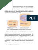 Review Sintesis Protein