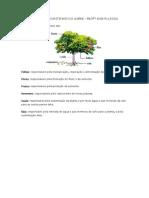 FUNÇOES DAS PARTES DAS PLANTAS.docx