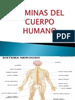 LAMINAS DEL CUERPO HUMANO.pptx