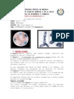 haemophilus.docx
