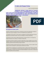 El Cultivo del Tomate Perita.docx