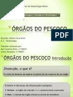 ÓRGÃOS DO PESCOÇO.pptx