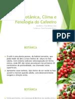 Botânica, Clima e Fenologia do Cafeeiro.pptx