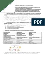 Apunte Citoesqueleto (1).docx