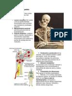 esquema_Funciones_esqueleto.pdf