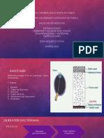 CORNEA.pdf
