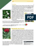 rdp.pdf