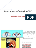 bases_SNC (1).pptx