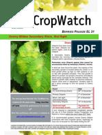 Adelaide Hills Crop Watch 171209