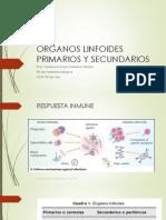 Órganos linfoides primarios y secundarios..pptx