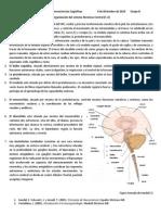 Organización del sistema Nervioso Central.docx