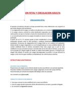 CIRCULACION FETAL Y CIRCULACION ADULTA - bernal.docx