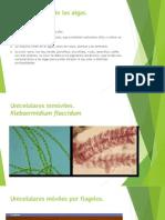 Supergrupos de las diversas algas.pptx